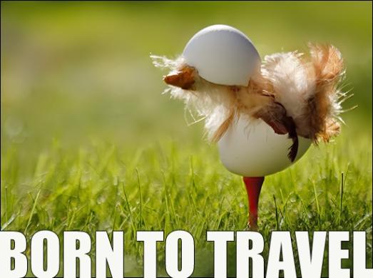 kyckling hjälm
