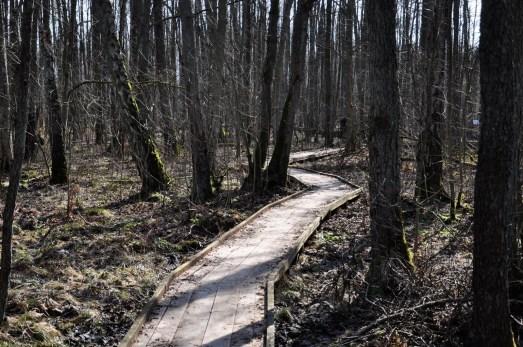 död skog